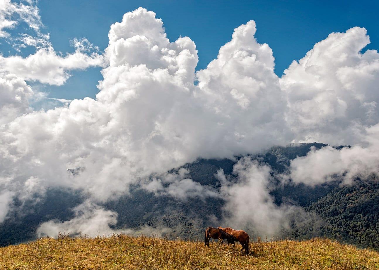 Cai salbatici cu cer dramatic in fundal circuit Annapurna Nepal