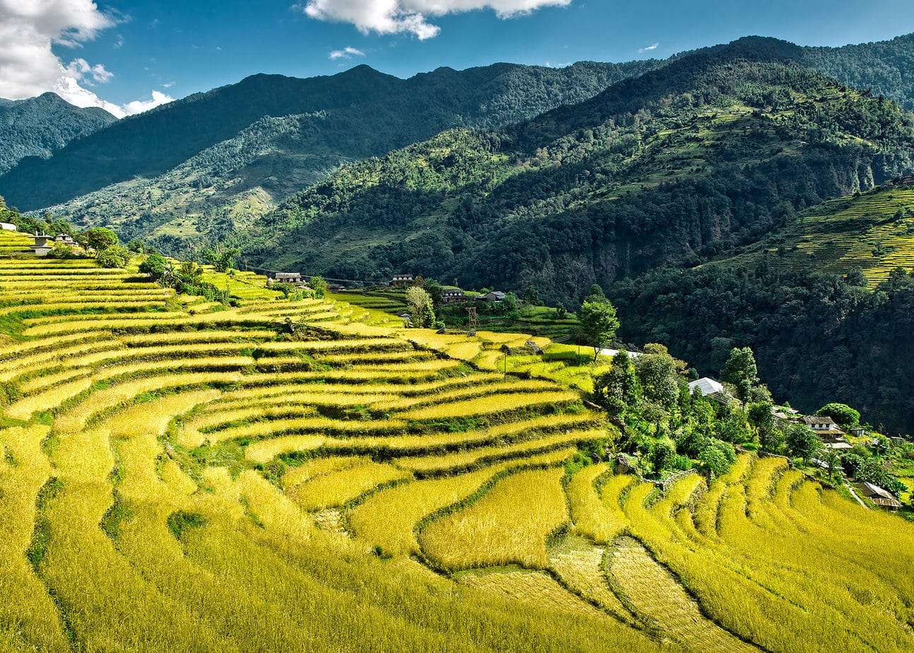 Camp de orez terasat Circuitul Annapurna Nepal